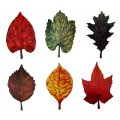 Leaf Shaped Cutouts - 6 Pack