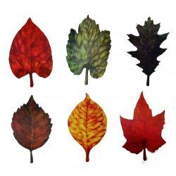 Leaf Shaped Cutouts - 6 Pack